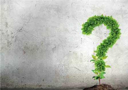 家中绿植你真的知道该怎么选吗