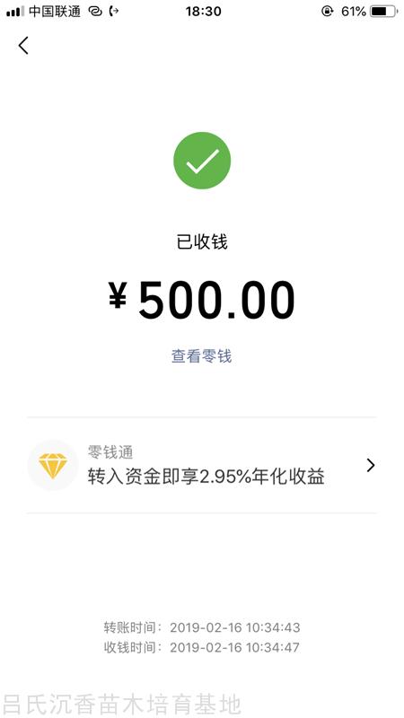 500奇楠苗