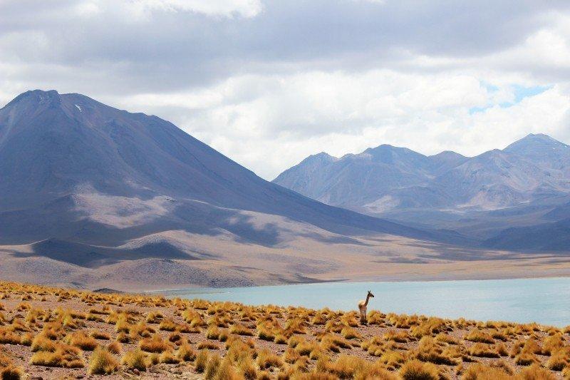 llama-in-mountain-landscape.jpg