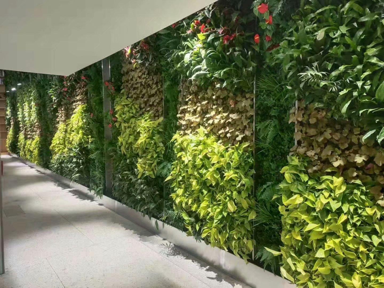 三亚酒店植物墙