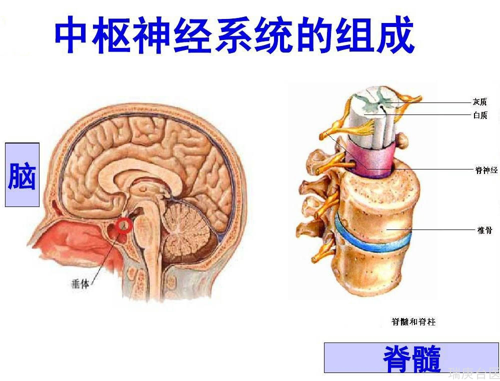 硼中子俘獲療法 | 中樞神經系統腫瘤&腦瘤新希望